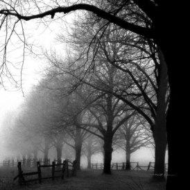 harold-silverman-black-and-white-morning